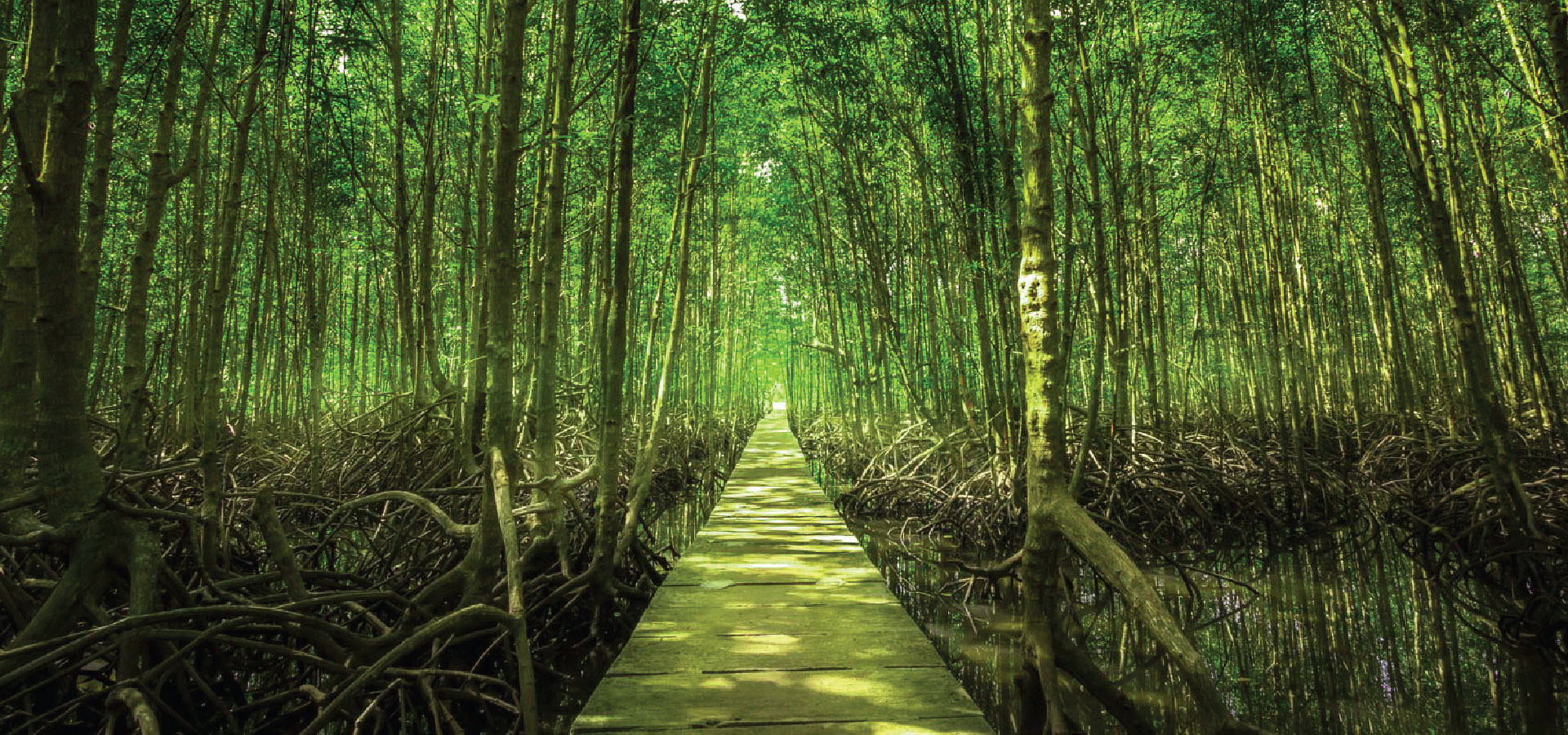 Mangrove is one of the most biologically diverse forests